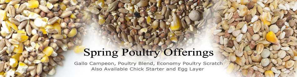 Spring Poultry